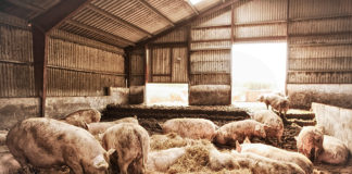 Coquinaria - Feestelijke rollade
