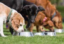 Platinum - 10 tips om het beste voedsel te kiezen voor je puppy