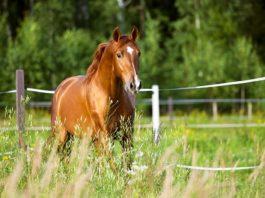 Equine Structural Chiropractic - Ruiter en paard optimaal in balans