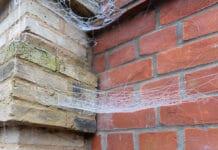Spiderbuster Nederland - Fotografie iStockphoto