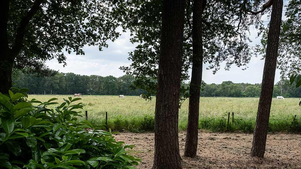 Bungalowpark 't Eekhoornnest - Fotografie: Nico Brons